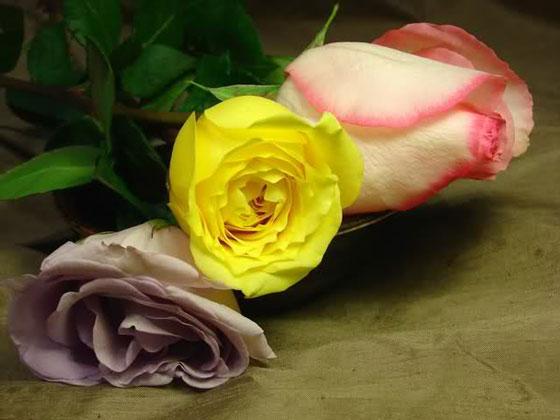 玫瑰干花的制作方法