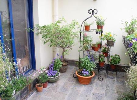30种草木享受阳台花园的灿烂时光