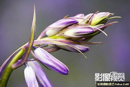 超级实用的拍摄花卉实战小技巧