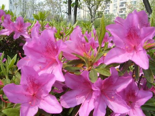 新年花卉送礼的讲究