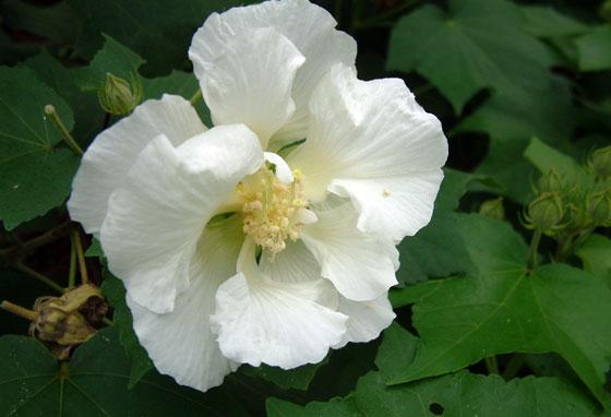 花卉图片大全 花卉图片 花卉图片及名称大全 花卉盆景