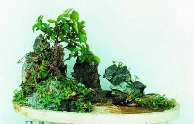 苔藓盆景制作_盆景型现在非常流行用苔藓制作微盆景