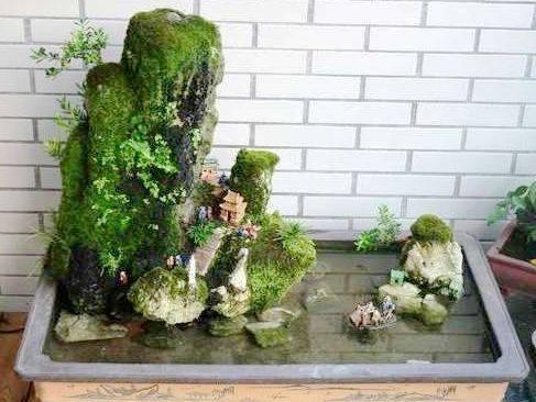 苔藓盆景制作_养苔藓的人纯手工制作的苔藓盆景。作者…