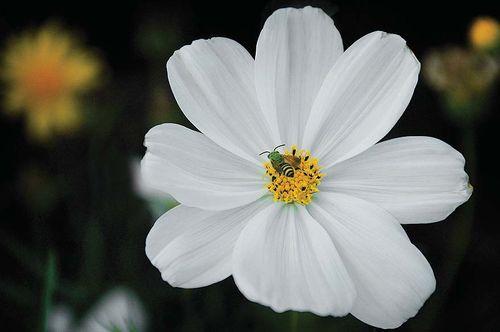 专业花卉摄影需要很强的技巧