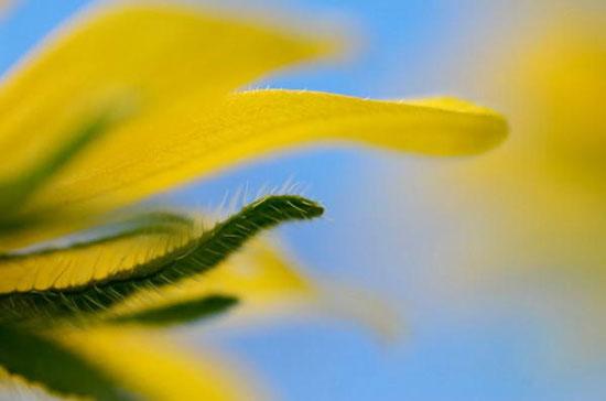 国家地理摄影师Jim Richardson的作品:花卉篇