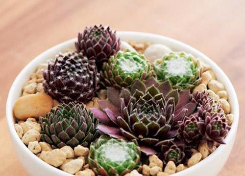 十一月份多肉植物的种植管理方法