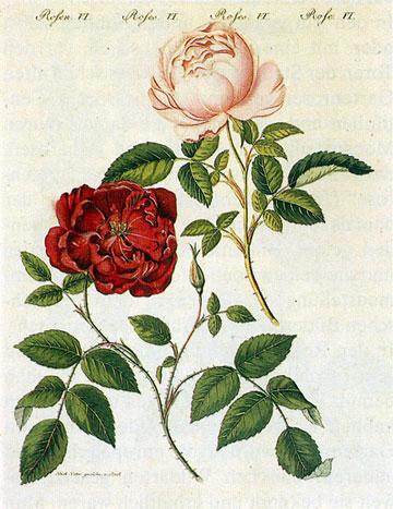 玫瑰花叶子钩法图解