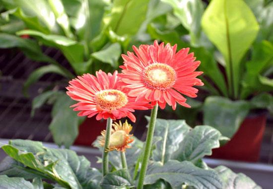 世界花卉大观园寒冬里的鲜花