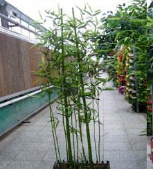 中式庭院花园的设计理念与方法