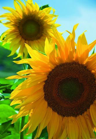 花卉摄影 近距离感受花卉之美