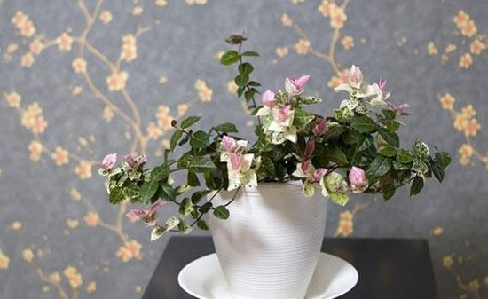 适合种植在居室内的室内植物 让家焕发清新
