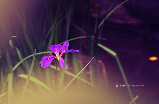 花卉摄影技巧 精彩摄影实例展现花的魅力