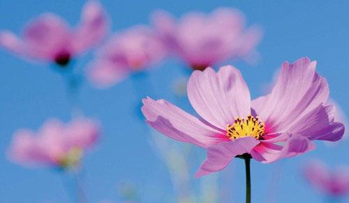 花卉摄影技巧:如何虚化花卉的前景和背景