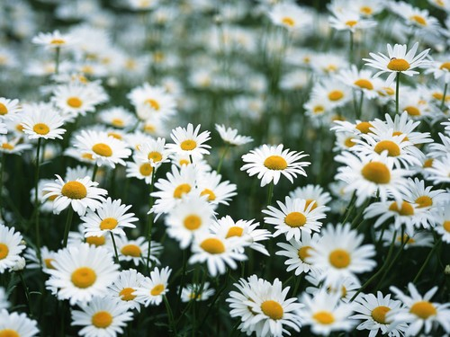 必学攻略:春季花卉摄影七大进阶技巧