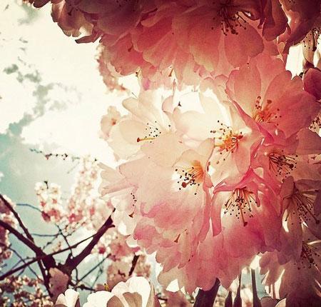 摄影大师教你拍摄花卉的技巧 拍出新意