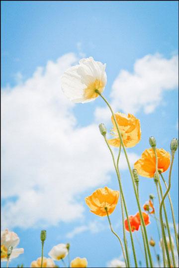 7个拍摄花草的小技巧 拍出不一样的花卉照片