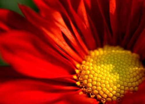 花卉摄影实战技巧:如何突出主体