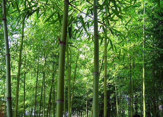 描写竹子的古诗句