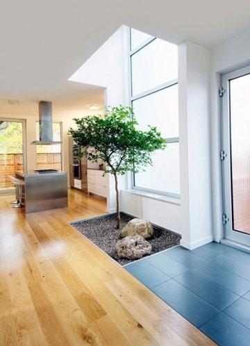 家居绿色植物摆放建议与小贴士