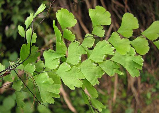 8种能净化室内空气的室内绿植及其功效