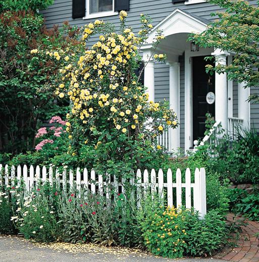 打造浪漫月季花园 月季花的养护方法