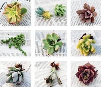 品种繁多的多肉植物组合 打造个性微景观