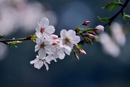 云南最热门的四大赏花地全攻略
