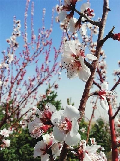 银川春季赏花地点和路线推荐