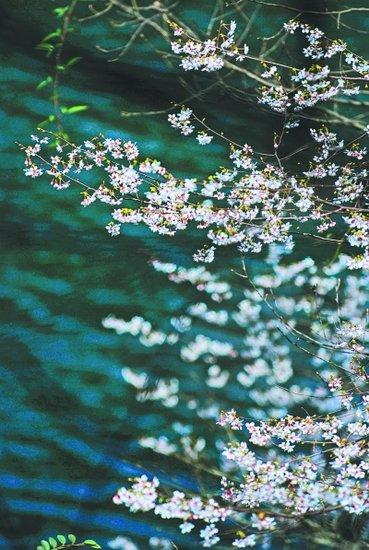 武汉周边最美赏花地及赏花线路推荐