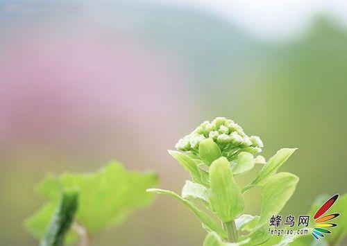 花卉摄影构图技巧 展现花卉娇艳的魅力