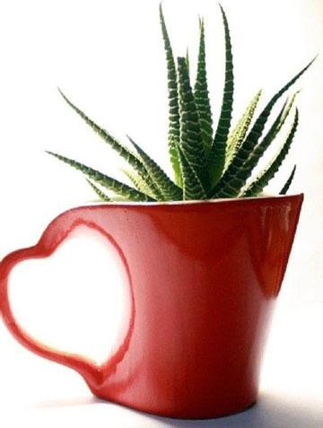 10种适合冬天种植的室内盆栽推荐