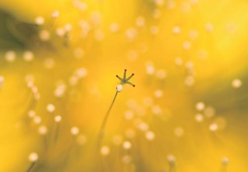 五大实例讲解 如何拍摄好花卉