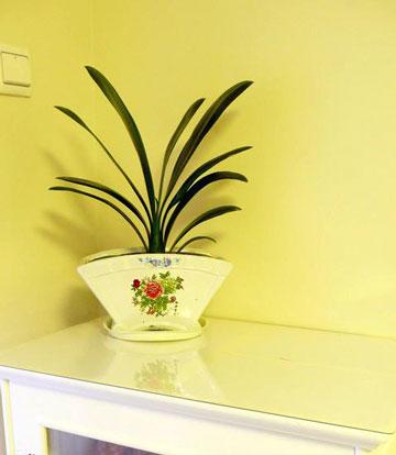 室内植物摆放常识与家居绿植巧搭配