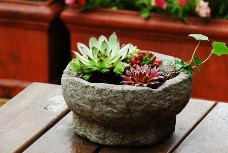 多肉植物在家庭园艺中的应用与养护方法