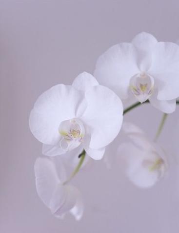 七夕情人节送花 玫瑰之外的爱情花卉推荐