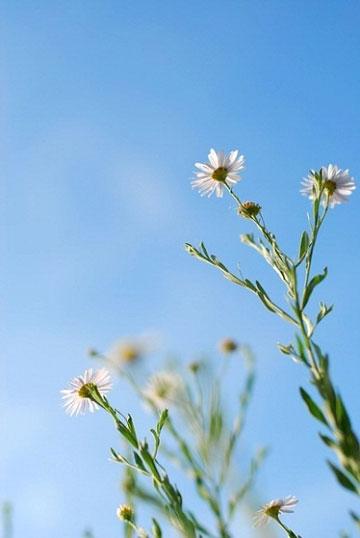 手边器材的植物微距摄影 留存那片花影叶色