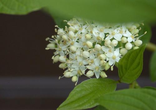 花卉摄影中背景的处理与光的运用