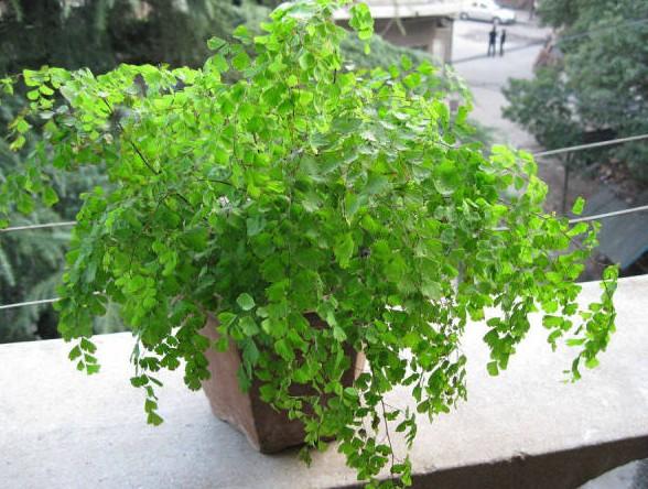 根据绿植特性摆放 8种常见室内植物的功效