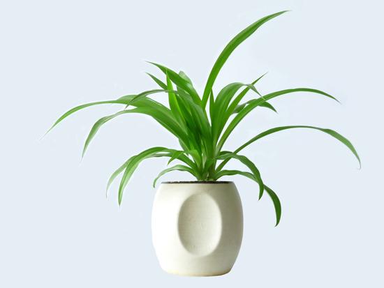 办公室花卉植物挑选摆放有讲究