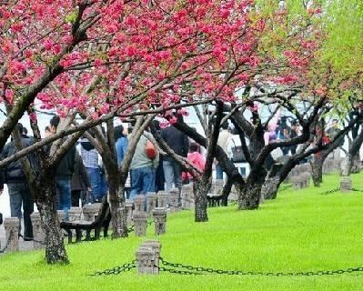 重庆春天踏青赏花的八个好地点推荐