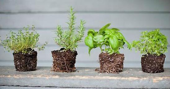 简单几步制作特色花盆 晋级家庭园艺达人