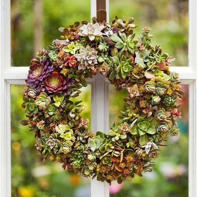 打造一场浪漫的多肉植物主题婚礼