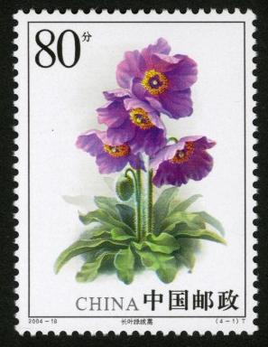 花卉邮票:2004-18 绿绒蒿(T)