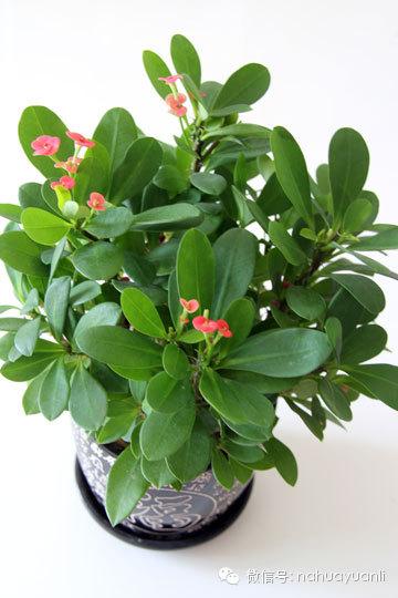 新手养花:好看又好养的花卉推荐