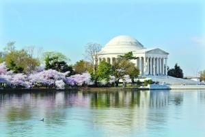 华盛顿樱花华丽盛放 大洋彼岸樱花海也绝美
