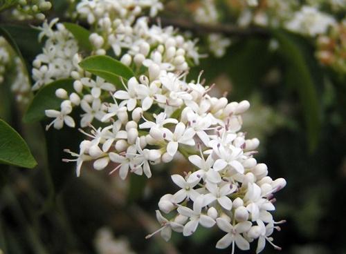 不能摆在室内的15种花卉 小心过敏中毒