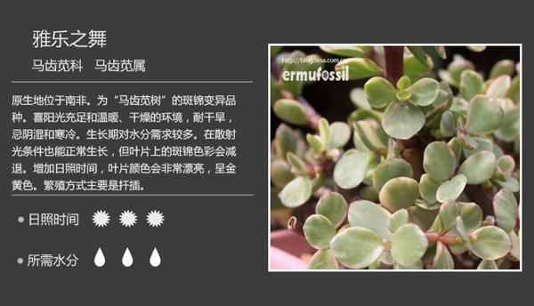 常见多肉植物图鉴及多肉植物品种大全(转)