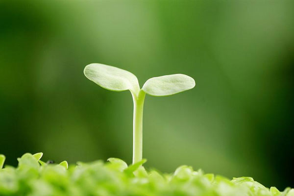 那些植物教会我们的事