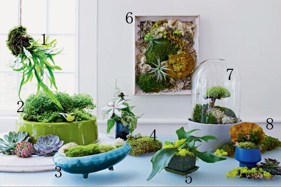 """苔藓盆景 让苔藓""""长""""到花盆上的方法"""