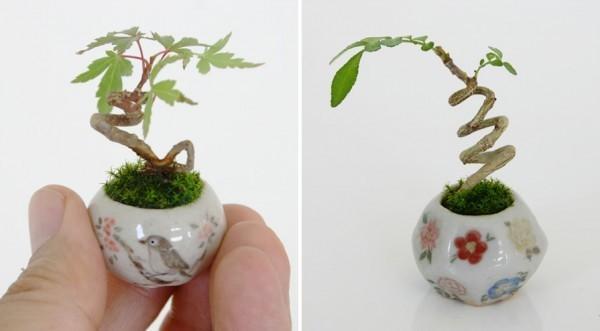 指尖上的盆栽 清新令人爱不释手